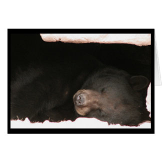 Sleeping Black Bear Card