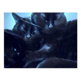 Sleeping black cats postcard