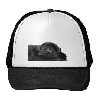 Sleeping Black Puppy Hat