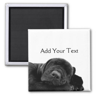 Sleeping Black Puppy Square Magnet