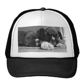 Sleeping Boxer puppies Mesh Hat