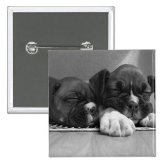 Sleeping Boxer puppies square button