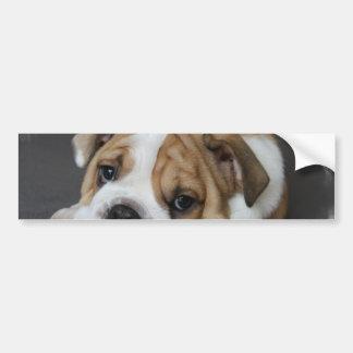 Sleeping Bulldog Bumper Sticker
