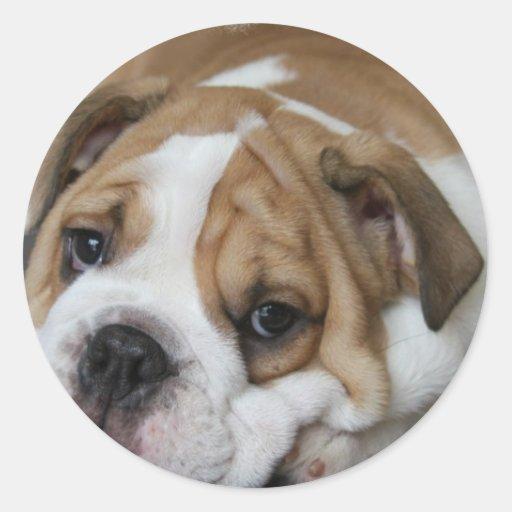 Sleeping Bulldog Stickers