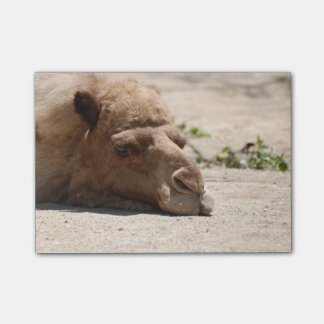 Sleeping Camel Post-it Notes