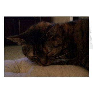 Sleeping Cat, card