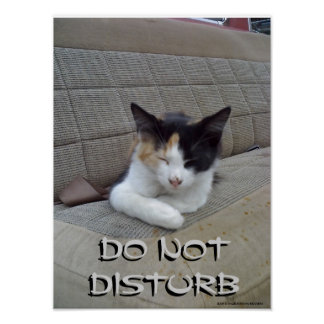 Sleeping Cat - Do Not Disturb Posters