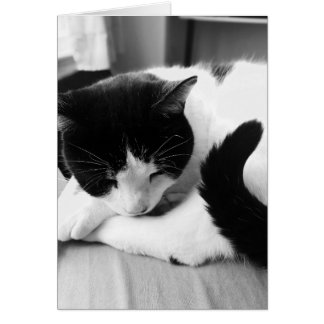 Sleeping Cat Photo Card