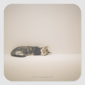 Sleeping cat square sticker