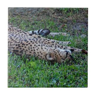 Sleeping Cheetah Small Square Tile