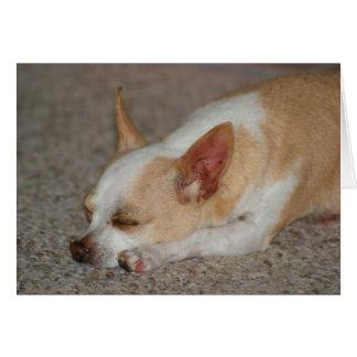 Sleeping Chihuahua Card