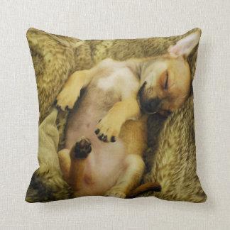 Sleeping Chihuahua Puppy Pillow Cushions
