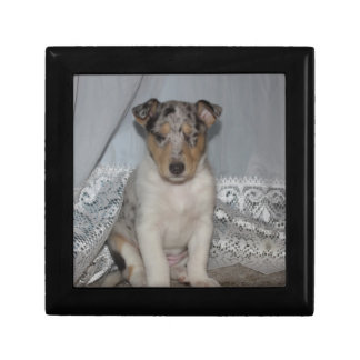 Sleeping Collie Small Square Gift Box