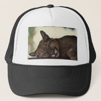 Sleeping Cougar Hat
