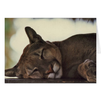 """Sleeping Couger"" Wildlife Photo Greeting Card"
