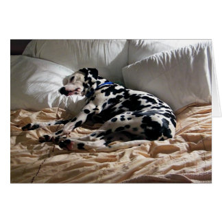 Sleeping Dalmatian Card