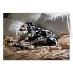 Sleeping Dalmatian Greeting Cards