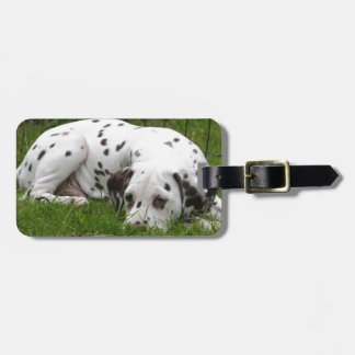Sleeping Dalmation laying in field Bag Tag