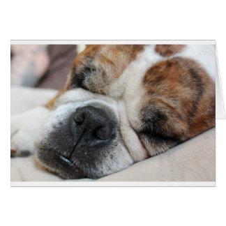 Sleeping Dog Card