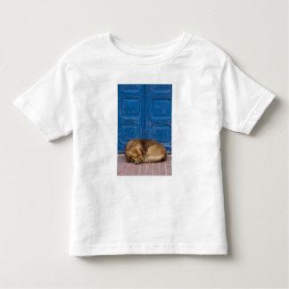 Sleeping dog, Essaouira, Morocco Toddler T-Shirt
