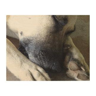 Sleeping Dog Wood Wall Art