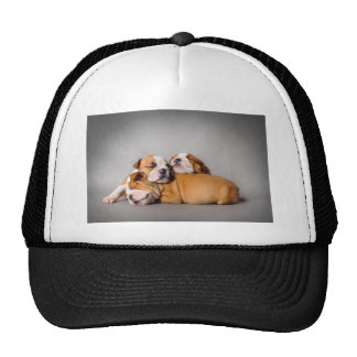 Sleeping English bulldog Cap