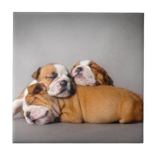 Sleeping English bulldog Ceramic Tile