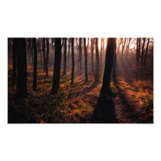 Sleeping Forest Photo Art