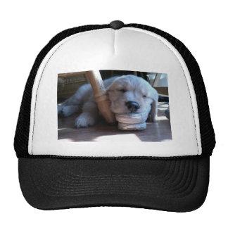 Sleeping Golden Retriever Puppy Hats