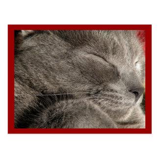 Sleeping grey cat postcard