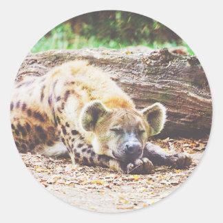 Sleeping Hyena Photograph Classic Round Sticker