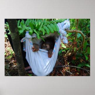 Sleeping Infant Orangutan Poster