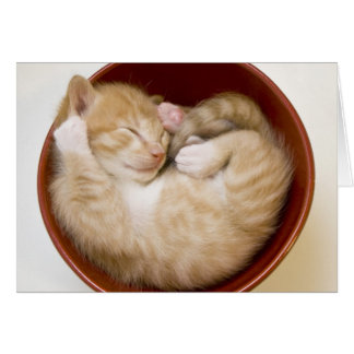 Sleeping kitten in simple red bowl on white card