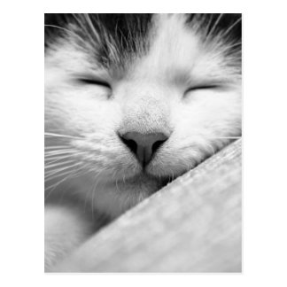 Sleeping Kitten Postcard