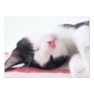 Sleeping Kitty Personalized Announcements