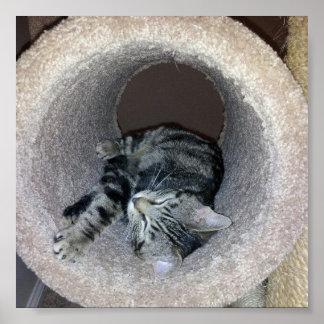 Sleeping Kitty Posters