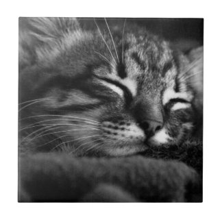 Sleeping kitty small square tile