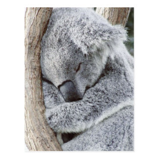 Sleeping koala baby postcard