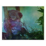 """Sleeping Koala"" Photograph"