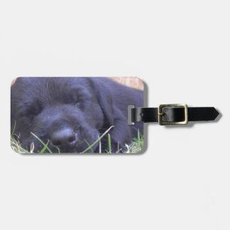 Sleeping Labrador Puppy Luggage Tag