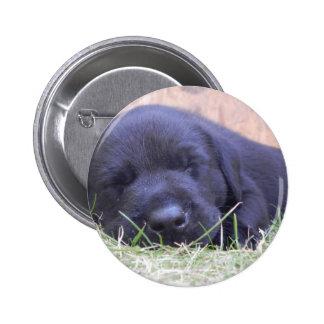 Sleeping Labrador Puppy Pinback Button
