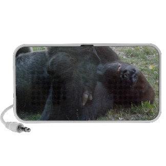 Sleeping Lowland Gorilla Kansas City Zoo Travel Speaker