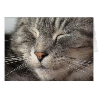 Sleeping Maine Coon cross tabby cat face close up. Card