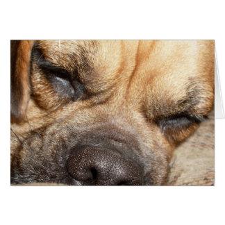 Sleeping Mastiff  Greeting Card