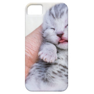 Sleeping newborn  silver tabby cat in hand case for the iPhone 5