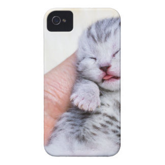 Sleeping newborn  silver tabby cat in hand iPhone 4 covers