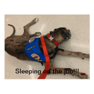 Sleeping on the job postcard