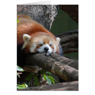 Sleeping Panda Bear  Greeting Card