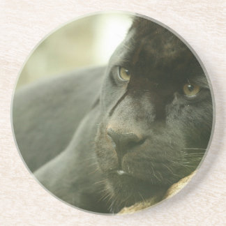 Sleeping Panther Coaster