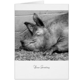 Sleeping Pig For All Ocassions Card